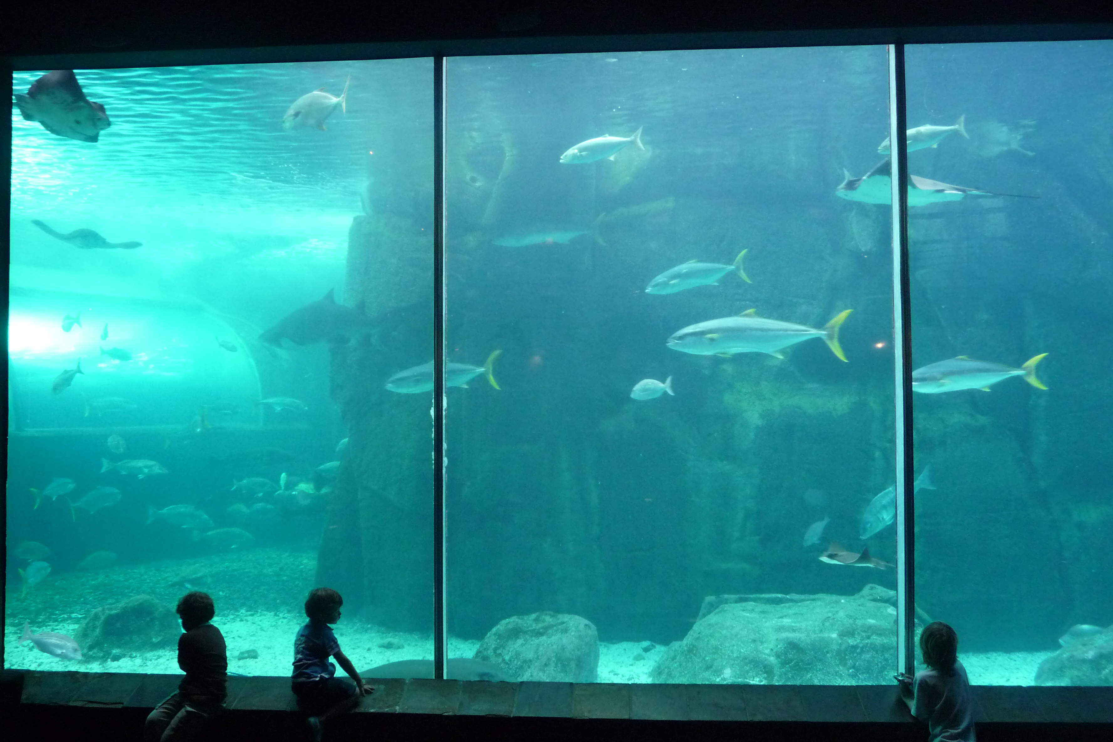 Freshwater aquarium fish cape town - Cape Town Aquarium Download Original Image